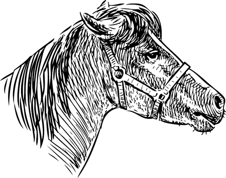 A sketch of the head of a horse in a harness