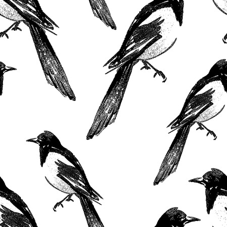 Seamless background of magpie sketches Vector Illustratie