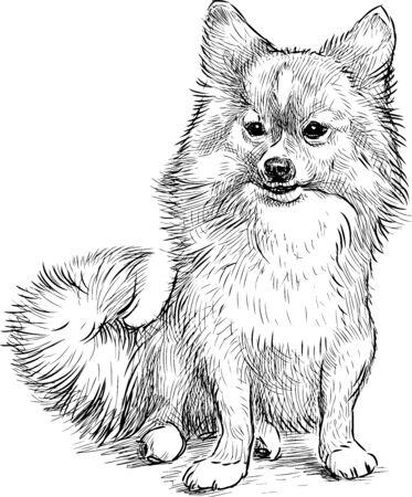 Sketch of sitting cute spitz dog