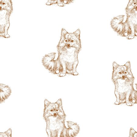 Seamless background of sketches of sitting spitz dog