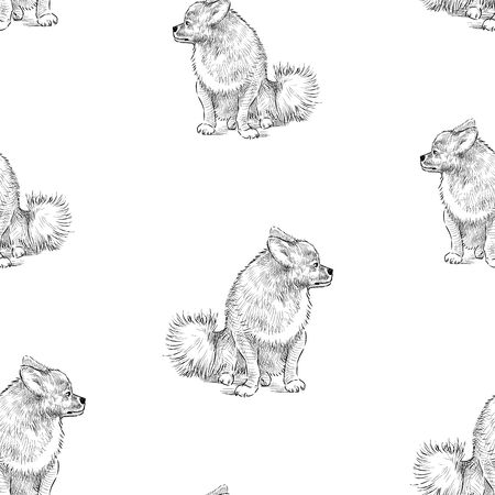 Seamless background of spitz dog sketches