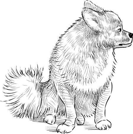 Sketch of spitz dog sitting and looking