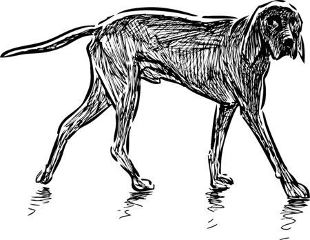 Sketch of walking hunting dog