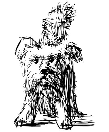Freehand drawing of funny shaggy lap dog