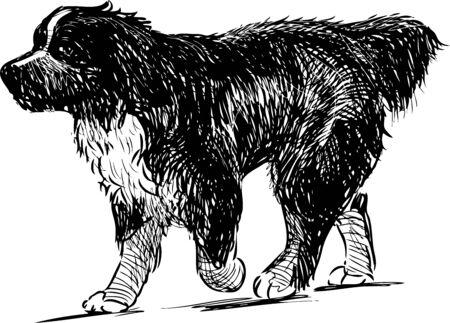 Sketch of walking newfoundland dog Vecteurs