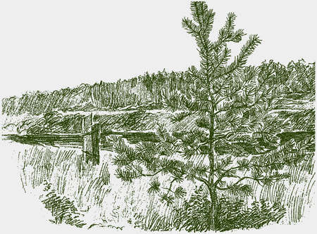 Freehand drawing of summer landscape riverside with young pine tree Illusztráció