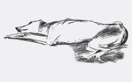 Vector illustration of lying tired greyhound