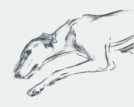 Vector drawing of lying tired greyhound