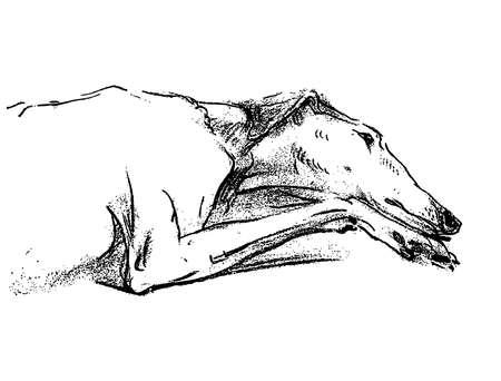 Freehand drawing of lying tired greyhound Illusztráció