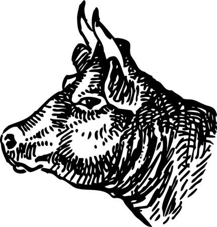 Freehand drawing of profile cow head Vectores