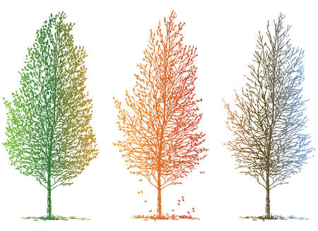 Vector image of sketches deciduous tree in different seasons