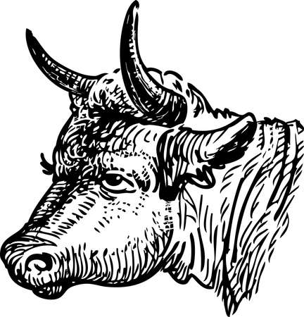 Freehand drawing of head sad cow