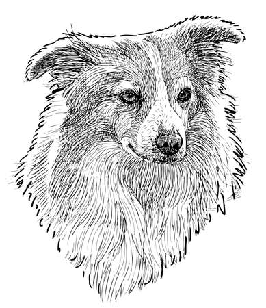 Freehand drawing of cute fluffy small dog Illustration