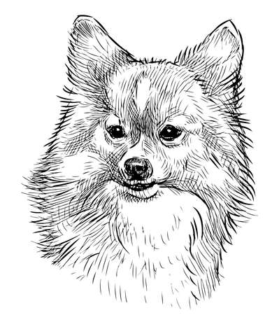 Portrait sketch of cute fluffy lap dog