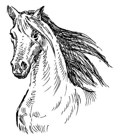 Sketch of head running horse