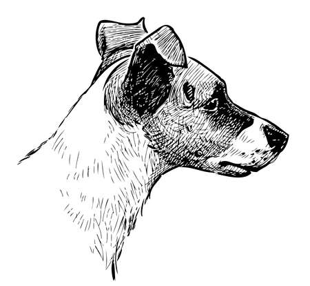 Freehand drawing of a head cute black and white small dog