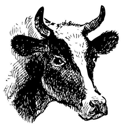 Vector drawing of a head of black and white cow