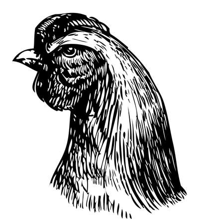 Vector drawing of head young hen