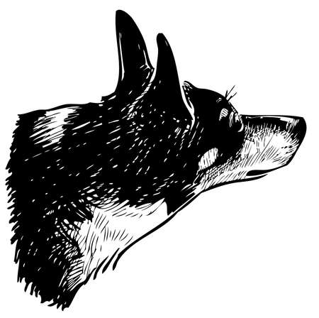 Sketch of head cute black and white small dog