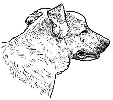Freehand drawing of profile head of watchdog