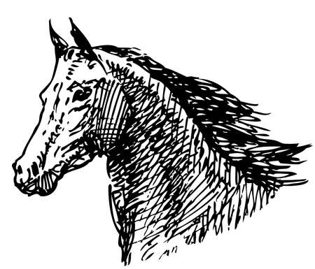 Sketch of a head galloping horse Illustration