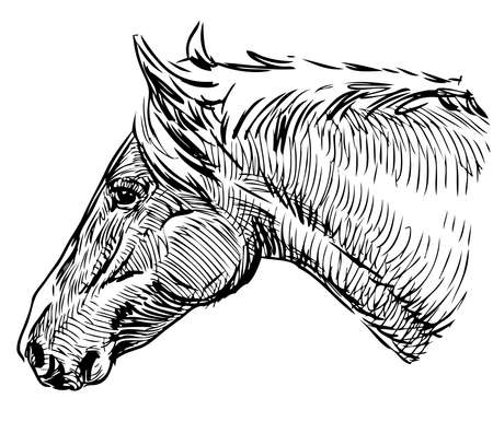 Sketch portrait of a domestic horse