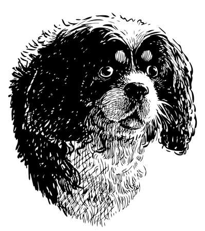 Sketch portrait of cute black and white terrier