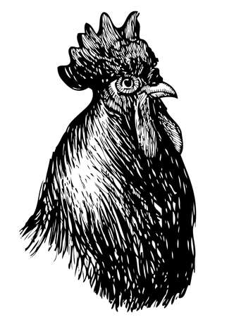 Vector drawing of head big rooster