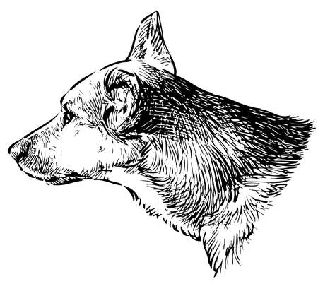 Sketch of head of guard dog