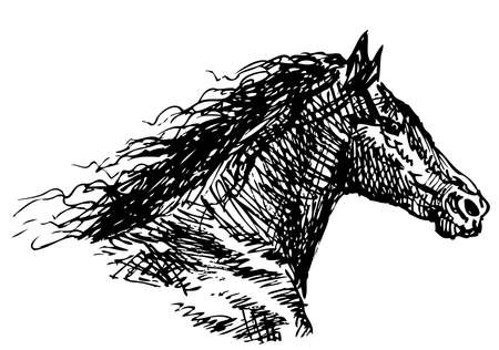 Freehand drawing of head of galloping horse