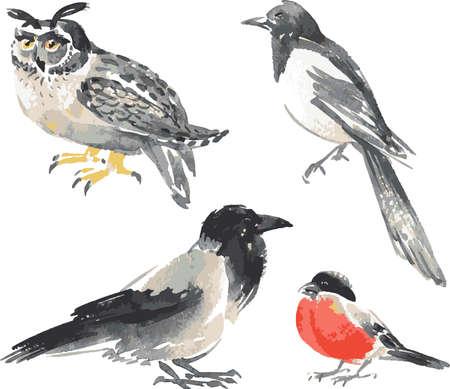 Vector image of watercolor sketches various wild birds Vectores