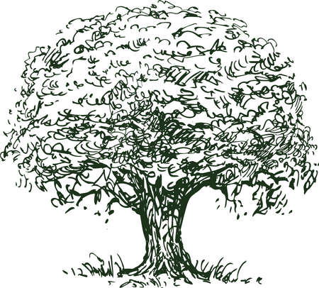 Sketch of silhouette old single deciduous tree Vectores