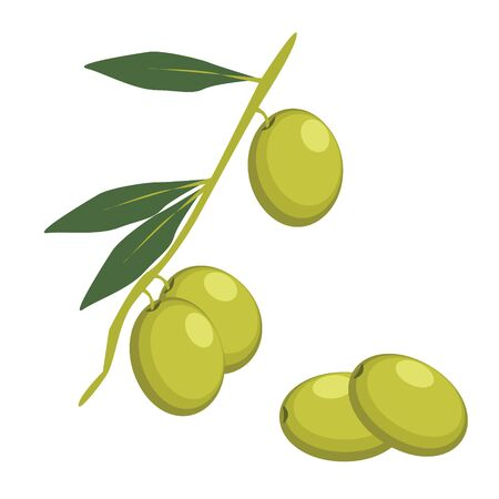 mediterranean diet: Set of Green Olives Branches. Olives icon