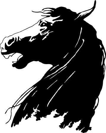 The head of a horse
