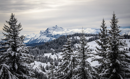 Landscape with christmass trees covered with snow and a mountain far away, France, Morzine, Les Gets Banque d'images - 28066901