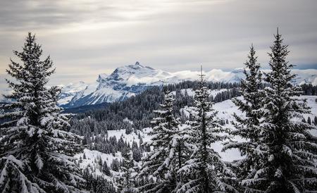 Paysage avec sapins couverts de neige et une montagne au loin, la France, Morzine, Les Gets Banque d'images - 28066901