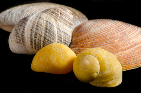 Closeup of sea shells isolated on black with exotic yellow and orange colors, texture, pattern, macro, horizontal position Banque d'images