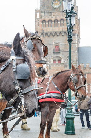 hackney carriage: Three horses with carriage harness in the main square church tower in the distance The Markt in Bruges Belgium. Stock Photo