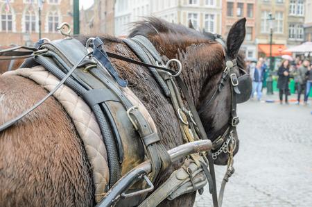 Cheval avec lourd harnais de voiture sur la place principale La Markt Bruges Belgique. Banque d'images