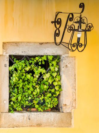 Vieille fenêtre recouverte de feuilles vertes sur bâtiment jaune et lampe rouillée, cru, détail, Venise.