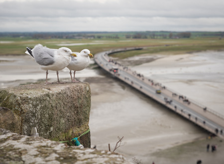 Two seagulls at the top of the fortress or Mont Saint Michel, view, low tide, Normandy, France Banque d'images - 97982295