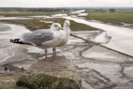 Two seagulls at the top of fortress of of Mont Saint Michel, view, low tide, Normandy, France Banque d'images - 97286103