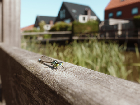 dragonfly sitting and posing on wooden fence in garden,  macro Banque d'images - 106131247