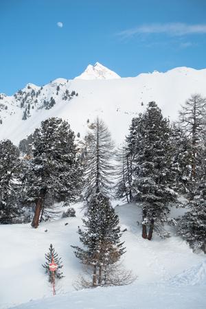 Different mountain pine trees, high on a mountain peak, blue sky and ski piste