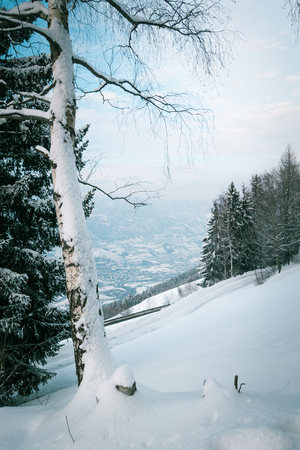 Birch tree on a mountain, view from a top, on the valley