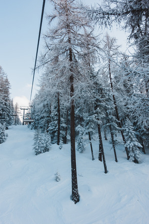 Big Pine trees under snow in the mountain forest, and a ski lift cable and chair