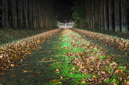 Driveway to the big white gate in the distance, in perspective, with tree rows and fallen leaves at one autumn night Banco de Imagens