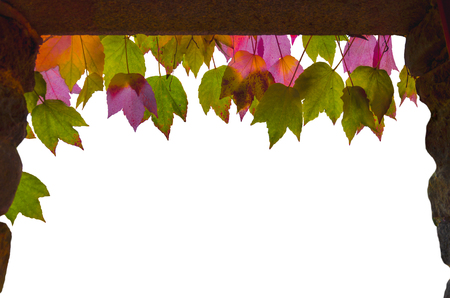 Isolated window or theater stage made of stone as curtains and colorful yellow, green, red, purple autumn leaves hanging from above
