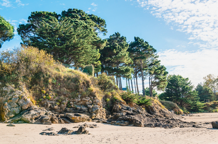 Edge of the sandy beach with trees on the little hill. Soil erosion. Banco de Imagens