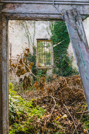 Broken door and old abandoned house with plants growing inside, France, Brittany Banco de Imagens